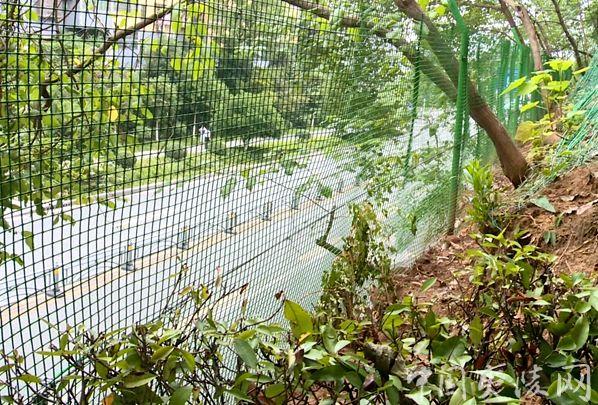 治理神仙湾公园山体 消除汛期安全隐患