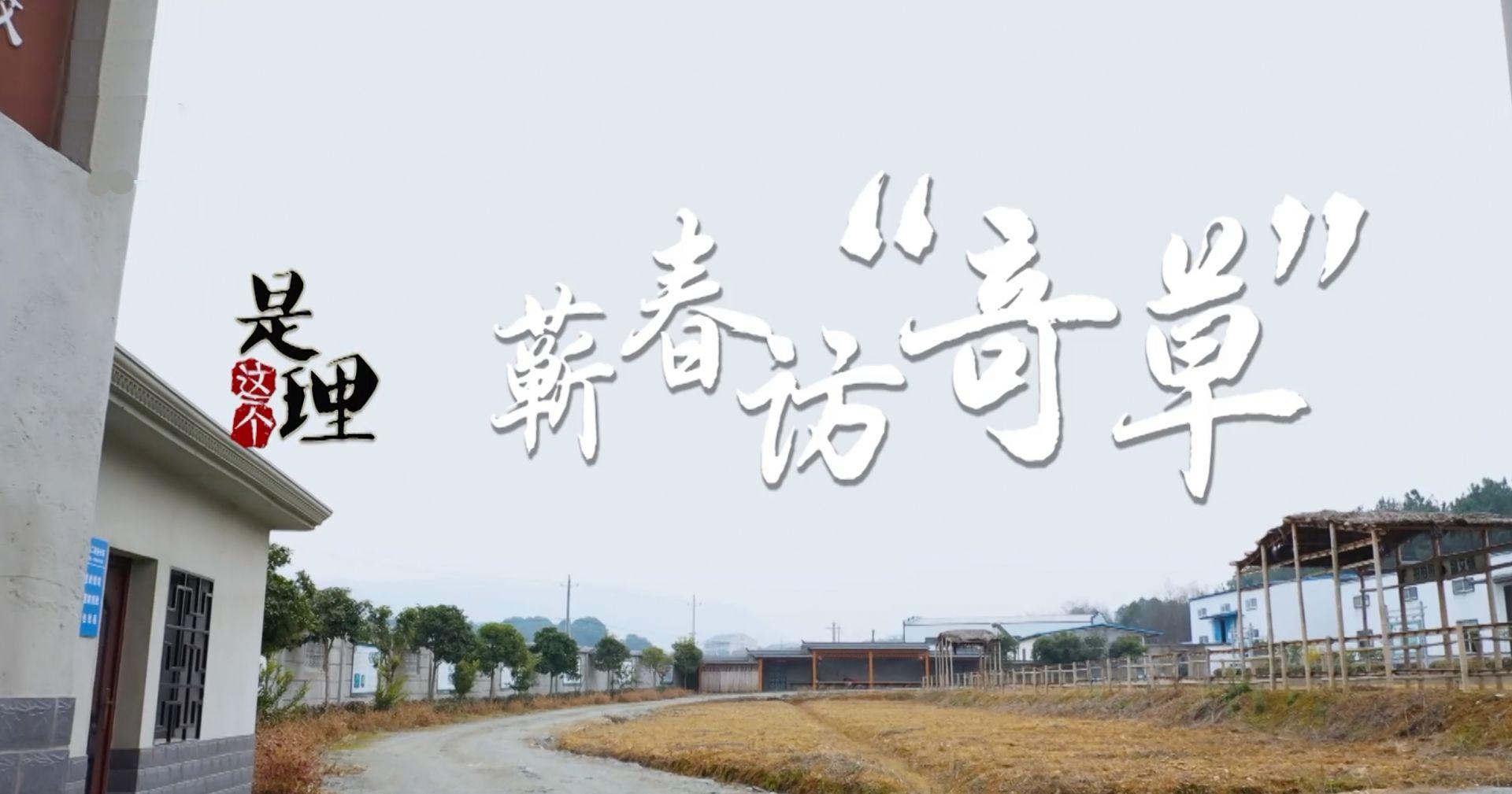"""《是這個理》:蘄春訪""""奇草"""""""
