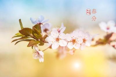 今日,春分
