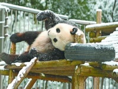 动物园熊猫窝图片