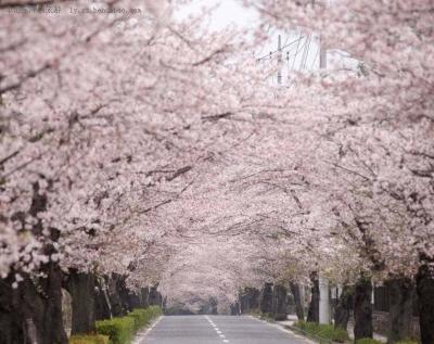 这个加长版春天,湖北的这些美景你都看过了吗?