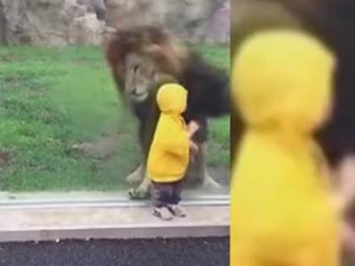 小男孩狮子 转身后竟发生这一幕