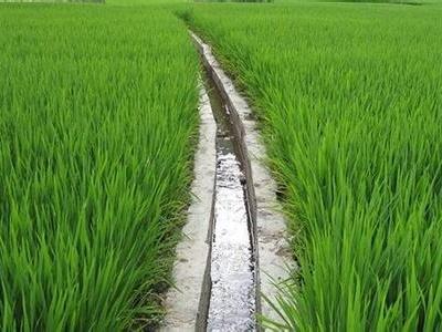 2016-06-03 06:43 《条例》规定,农田灌溉用水实行总量控制和定额