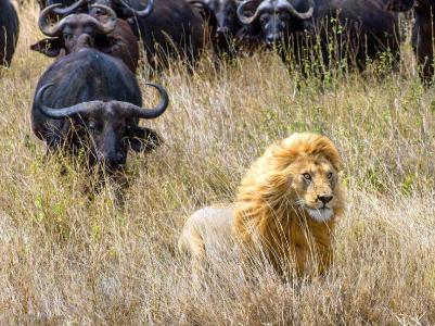 """国际野生动物保护机构""""生而自由"""""""