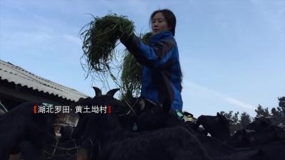 我创业我自豪—牧羊女•刘锦秀