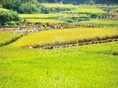 农业结构调整和农业农村改革方面