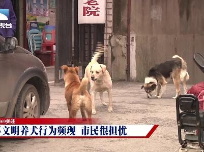360关注:不文明养犬行为频现 市民很担忧