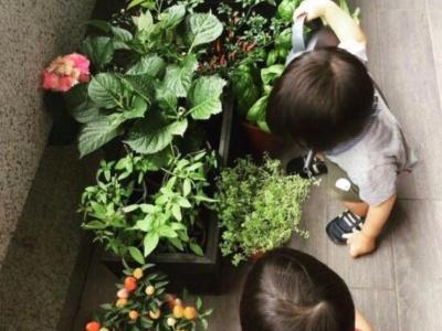 林志颖双胞胎帮妈妈浇花 认真模样超可爱