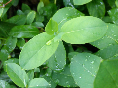 今天局部阵雨 明后天小到中雨 武汉连续三天雨水洗浮尘