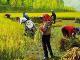 """湖北发布涉农价费政策清单 对农民生产生活专项收费""""清零"""""""
