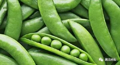 """《湖北经视》武汉""""最贵蔬菜""""竟是它"""