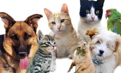 澳大利亚大学设宠物动物园助学生解压