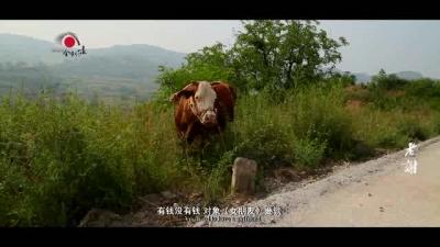 中国梦展播——老谢
