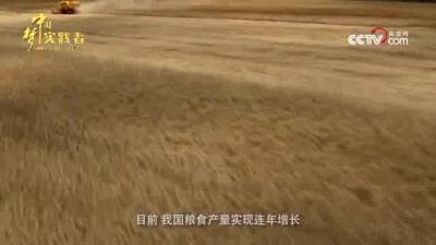 """中国梦展播——[追梦中国·影响力]袁隆平:稻田里的""""守望者"""""""