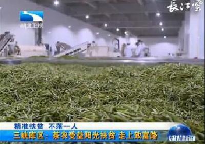 精准扶贫 不落一人 三峡库区茶农喜领红包 做大茶产业年年有惊喜