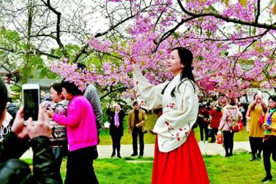 武大因接待赏樱花游客每年投入600万 校长:愿意承担