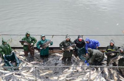 湖北保康:水美鱼肥人欢笑