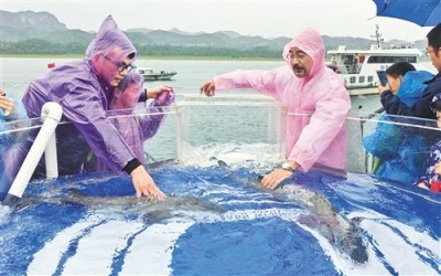 长江生态的风向标:中华鲟永续生存成为可能