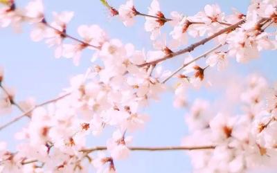 我想和你在诗词里,虚度最后的春光