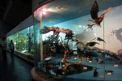 武汉自然博物馆7月开馆 可身临其境体验动物世界