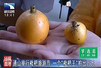 """通山举行枇杷旅游节,一个""""枇杷王""""拍出万元"""