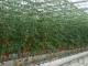 农村广播|湖北嘉鱼县的农业黑科技