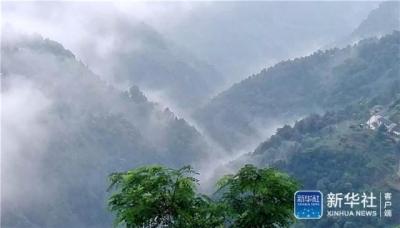 """湖北宜昌:""""三峡茶谷""""风景美"""