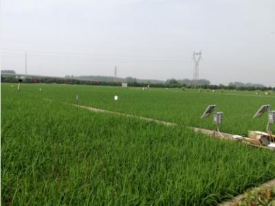 湖北省启动气象灾害高温三级应急响应 晴热将持续到月底