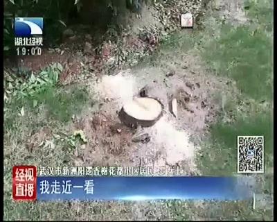 小区十多棵大树无故被砍引起居民不满,物业:本想修剪操作失误