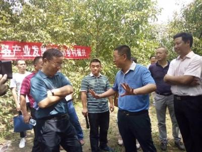 湖北省核桃产业科技发展论坛在保康举行