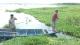 湿地花海引客来 促渔民上岸发展