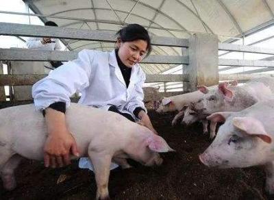 非洲猪瘟防控形势严峻  湖北发布重大动物疫病防控公告
