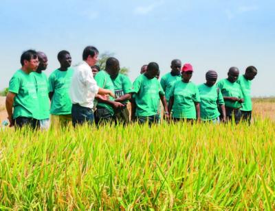 """""""魔术水稻""""扎根非洲大地 ——湖北援非农业合作观察"""
