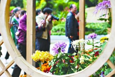 金秋菊展六大主题活动等您来 解放公园每天免费供应菊花茶