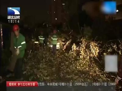 雨夜惊魂!行道树连根拔起倒在马路上,树下压着载客出租车