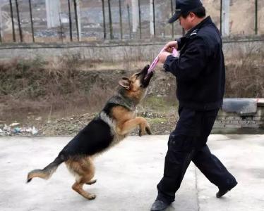 """保康警犬""""猎豹""""和它的训导员不得不说的故事…"""