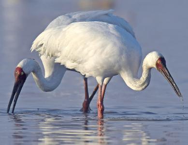 湖北建成282处野生动物保护地 一批珍稀濒危物种来鄂安家