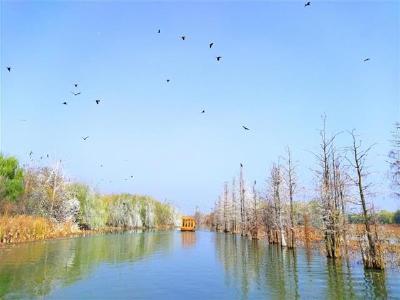 湖北10处国家湿地公园试点顺利