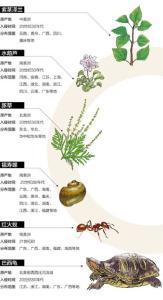 外来物种登陆中国:超半数外来有害物种系人为引种