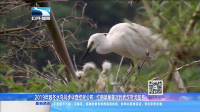 2019年越冬水鸟同步调查结果公布 红胸黑雁首次到武汉府河越冬