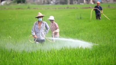 中央一号文件作全面部署:保持农民增收好势头