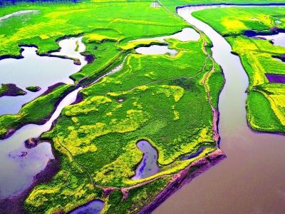 每年逾10万只候鸟来汉越冬越来越多候鸟做客湿地江城