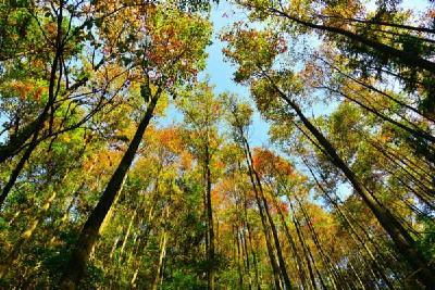 湖北三地获批国家级森林公园