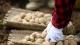 两大法宝 助力恩施硒土豆高质量发展