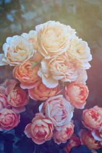 诗词丨心中若有桃花源,何处不是水云间