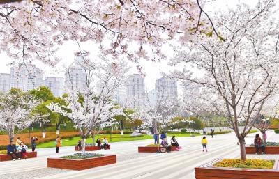 武汉50万株樱花树绽放 20余个赏樱片区1天迎客30万