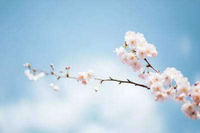 诗词丨春天到底有多美?这是最诗意的回答