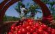 水果價格現回落勢頭 有望進入季節性下行