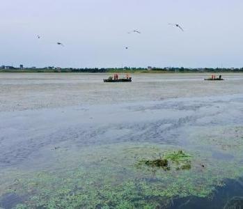 """湖北金湖国家湿地公园设""""水草保护区""""守护鸟类家园"""