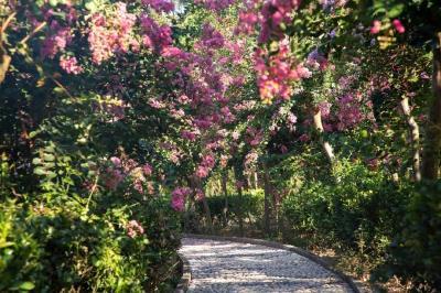 人间七月草木盛,湖北喊你看紫薇花开啊!